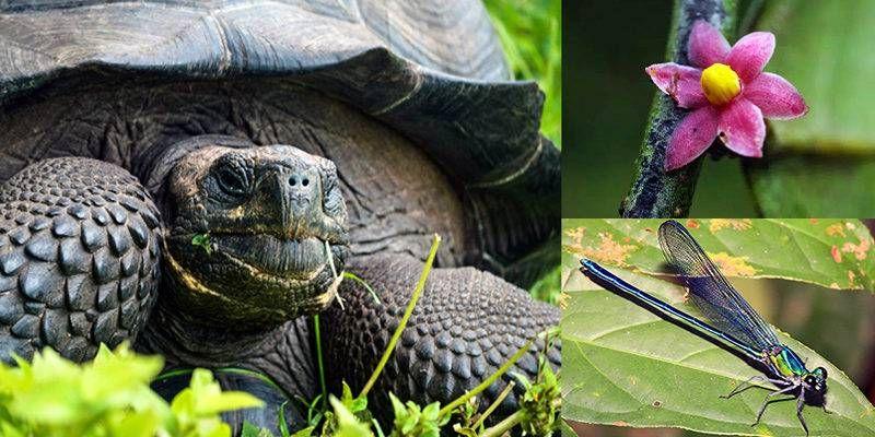 La Top Ten delle nuove specie identificate nel 2016-800x400