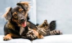 Sei un tipo da cane o da gatto3-800x400