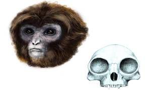Un antico primate-300x180