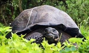 Una super tartaruga-300x180