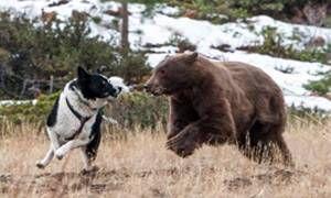Il rituale della caccia all'orso-300x180