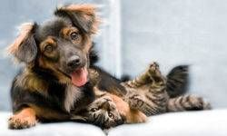 Cani e gatti3-800x400