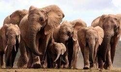 Il clan degli elefanti4-800x400