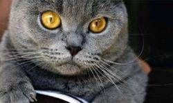 Le 5 razze di gatti più eleganti3-800x400