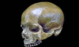 Neanderthal-300X180