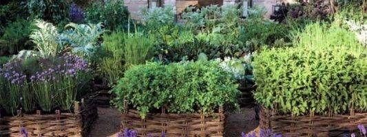 Le piante aromatiche: tanti consigli utili da sapere