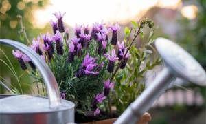 Coltivazione in vaso-300x180