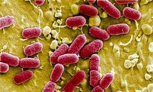 Come mai i batteri diventano antibioticoresistenti-300x180