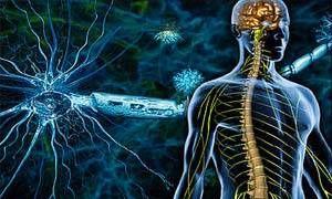Conoscere i nervi per mantenerli sani-300x180