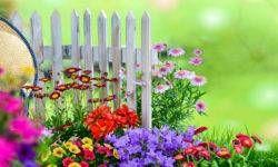Il giardino ornamentale2-800x400