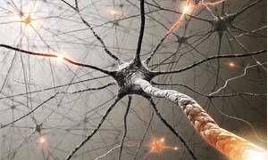 Il sistema nervoso-300x180