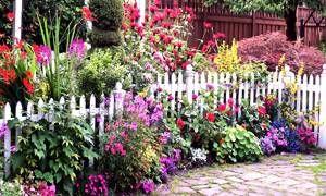 Ogni pianta al posto giusto-300x180