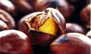 I frutti nostrani-300x180