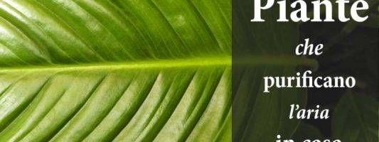 Le piante che purificano1-800x400