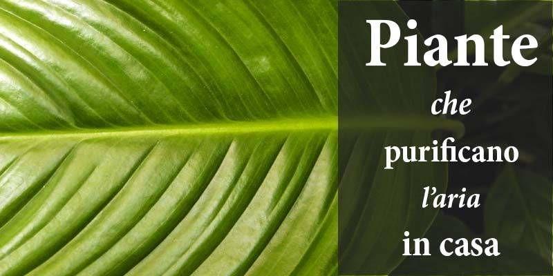 Le piante che purificano l 39 aria in casa - Piante che purificano l aria in casa ...