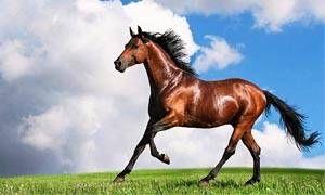 Cavallo-300x180