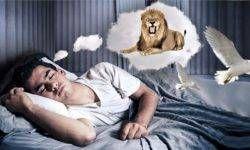 Gli animali nei sogni3-800x400