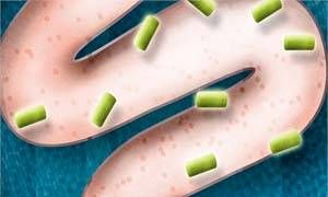 Probiotici-300x180