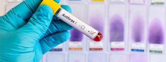 Antrace2-800x400