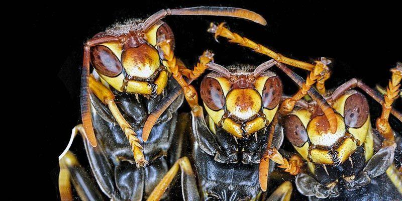 Gli insetti2-800x400