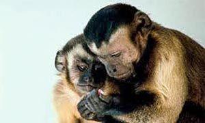 Siamo come scimmie-300x180