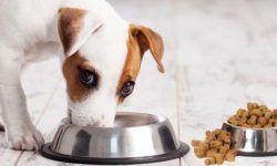 2Come far mangiare correttamente il nostro cane1-800x400