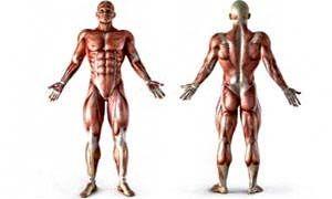 Farsi i muscoli-300x180