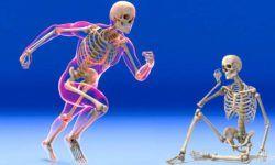Il sistema scheletrico1-800x400