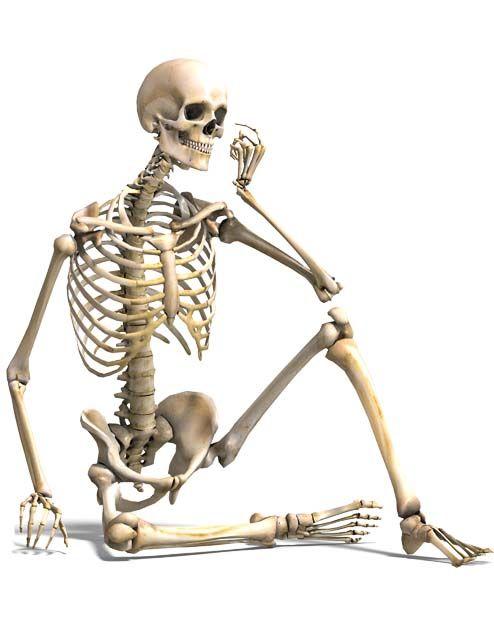 Il sistema scheletrico3-490x520