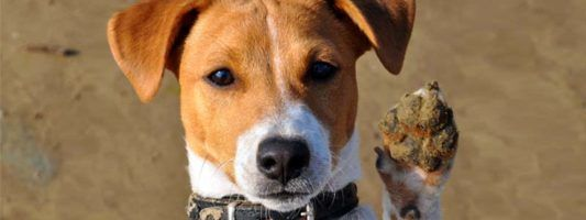 Jack Russell6-800x400