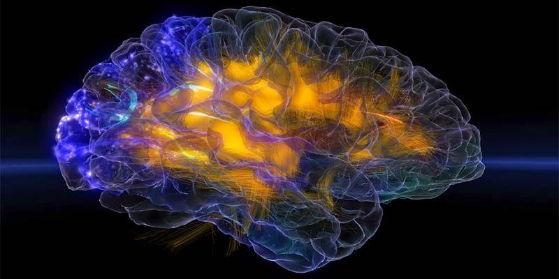 10 miti da sfatare sul cervello2-800x400