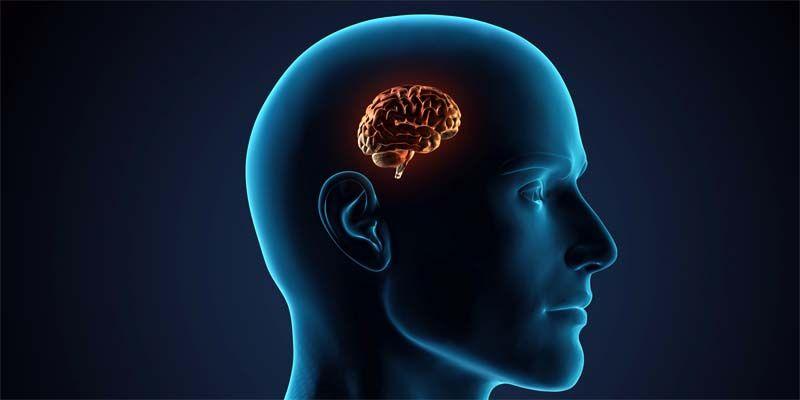 10 miti da sfatare sul cervello3-800x400