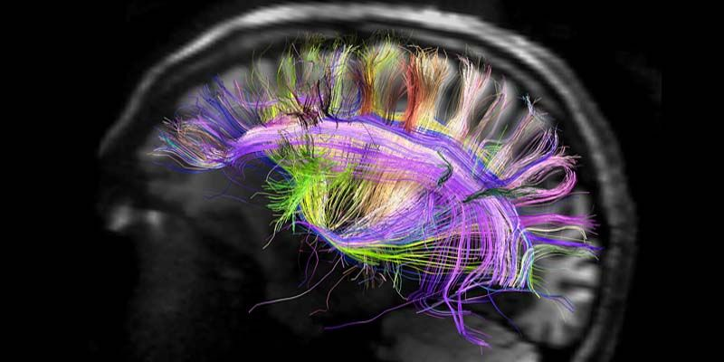10 miti da sfatare sul cervello7-800x400