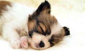 Quali fattori influenzano la qualita del sonno dei cani-300x180