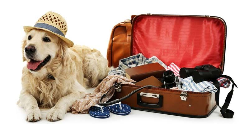 Andare in vacanza pet2-800x400