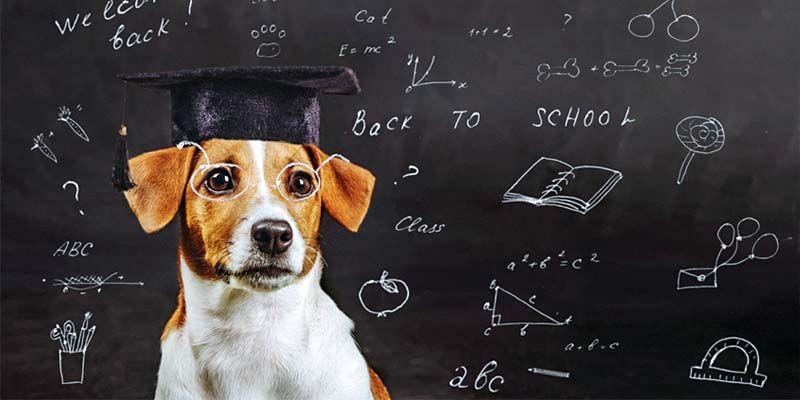 I cani intelligenti1-800x400I cani intelligenti1-800x400