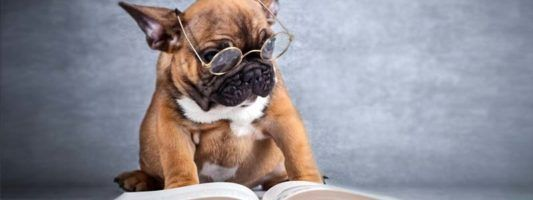 I cani intelligenti2-800x400