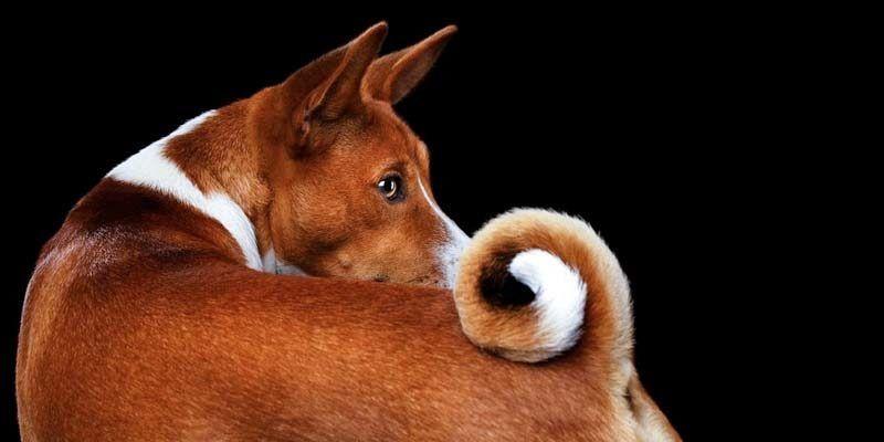 La coda del cane1-800x400