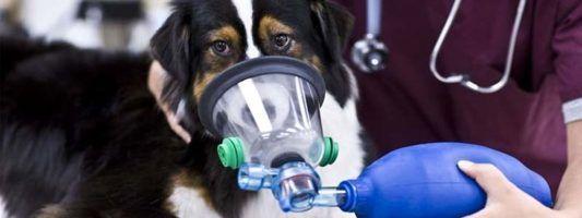 Le patologie respiratorie del cane1-800x400