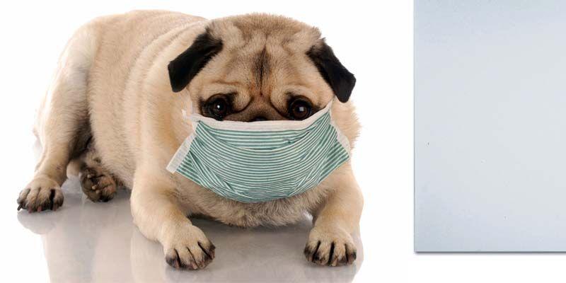 Le patologie respiratorie del cane2-800x400