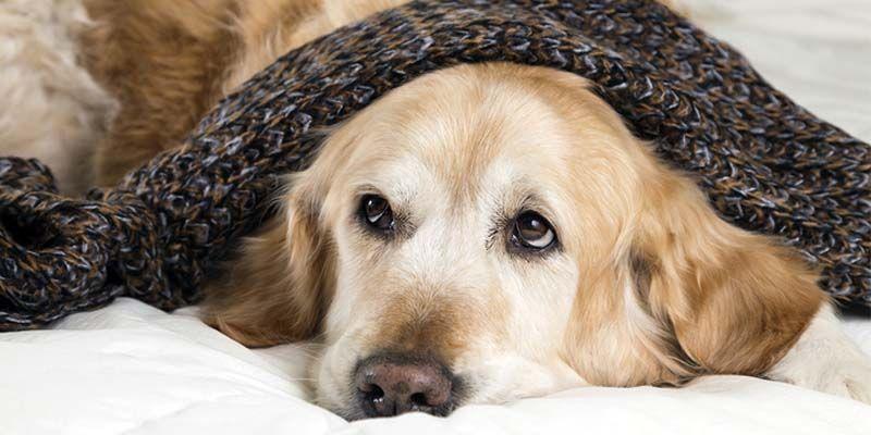 Le patologie respiratorie del cane4-800x400