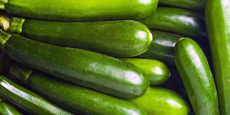Le zucchine1-800x400