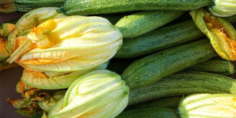 Le zucchine2-800x400