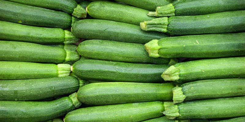 Le zucchine4-800x400