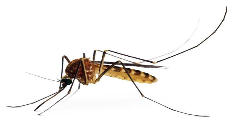 zanzare3-800x400