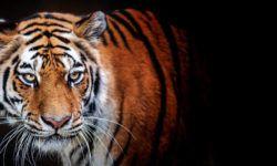 7 famosi animali selvatici1-800x400
