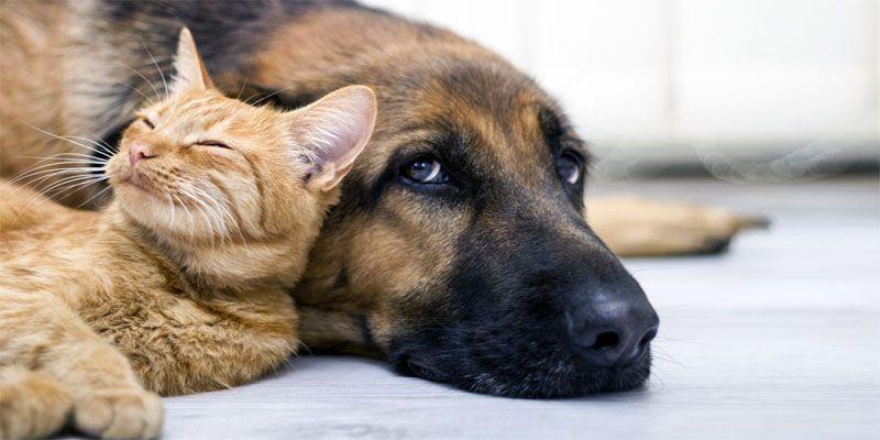 Cani e gatti, amici domesticati da secoli1-800x400