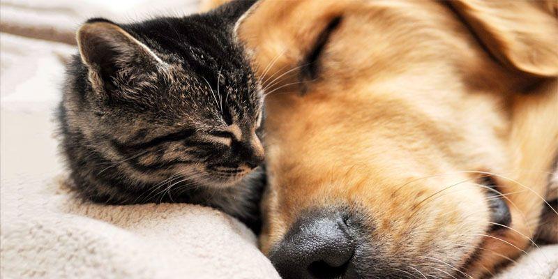 Cani e gatti, amici domesticati da secoli2-800x400