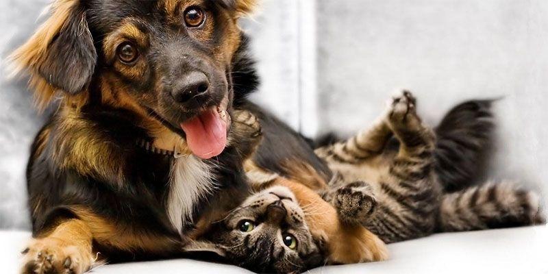 Cani e gatti, amici domesticati da secoli3-800x400