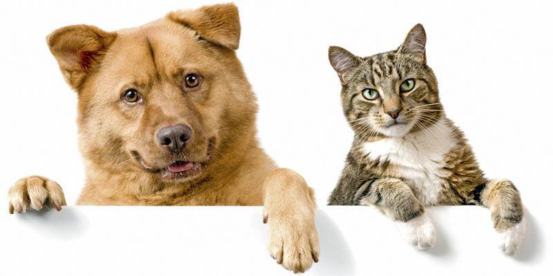 Cani e gatti, amici domesticati da secoli4-800x400